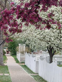 White Picket Fence | Flickr - Photo Sharing! So beautiful!     ♥Aline