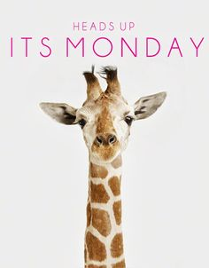 Good Monday Morning to you! A lil Giraffe humor. Q: What do giraffes have that no one else has? A: Baby giraffes! Montag Motivation, Monday Humor, It's Monday, Hello Monday, Happy Monday Quotes, Funny Monday, Monday Motivation Quotes, Monday Blues, Wonderful Day