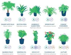 Air Filtering Plants based on NASA Standards