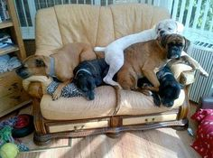 """now that is what I call a """"love seat"""" :)"""