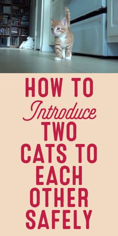 How To Introduce Two Cats To Each Other Safely