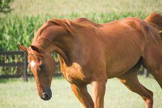 Aj Photography, Horses, Pictures, Animals, Photos, Animales, Animaux, Animal, Animais