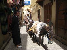 Mustafa and donkeys - Fes Medina
