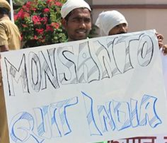 In very bad news for Monsanto, India, the largest agricultural nation in the world, not only plans to label GMO foods, but appears likely to ban GMO crops as well.