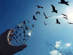 970. The specimens left the jar quickly, growing back to their full size as they took to the air. She watched their formation with fascination and some envy; to be set free so easily, flying happily above those still stuck. #970.