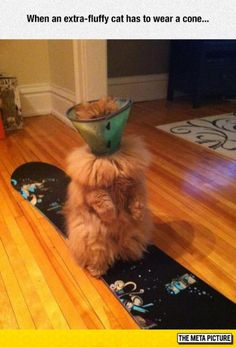 It Looks Like A Furry Water Cooler - http://funny.starboyonline.net/funny/it-looks-like-a-furry-water-cooler