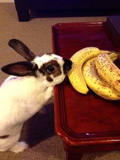 Bunny has found noms