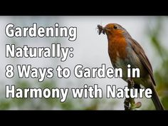 Gardening Naturally: 8 Ways to Garden in Harmony with Nature Organic Gardening, Gardening Tips, Sustainable Gardening, Vegetable Gardening, Tips To Gain Weight, Compost Soil, Runner Tips, Save Our Earth, Garden Planner