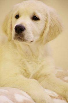 Beautiful dog portrait!