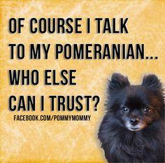 Pomeranians!!