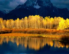Grand Teton National Park, National Parks, Beautiful World, Beautiful Places, Beautiful Sky, Beautiful Scenery, Simply Beautiful, Absolutely Stunning, Yellow Tree