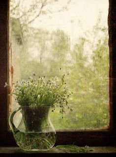 Raindrops and Roses Raindrops And Roses, Whiskers On Kittens, Through The Window, Rain Drops, Simple Living, Windows And Doors, Love Art, Mists, Bouquet