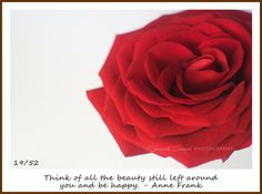 Think of all the beauty still left around you and be happy. - Juanita Cannan Photography