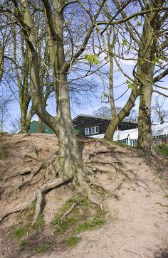 Roots. Hatton farm, UK. Photo by dochimichi.