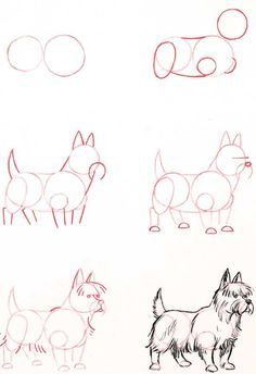 Learn to draw: Terrier