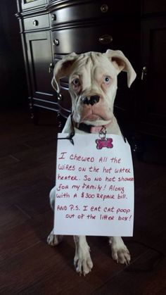 6 Great Tips for Getting Your Dog Toilet Trained Funny Boxer, Cute Funny Dogs, Funny Dog Memes, Funny Animal Memes, Cute Funny Animals, Dog Jokes, Animal Funnies, Funny Pets, Boxer Dog Quotes