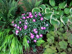 Shade loving | Our Fairfield Home & Garden