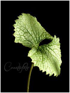 Kristen Olivares-Fine Art Photography-Beautiful simplicity