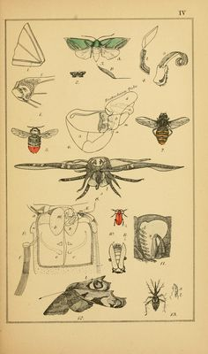 Insect variety: its propagation and distributio...