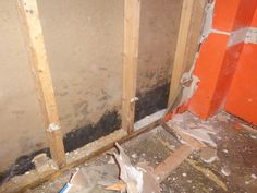Black Mold Removal in Bensalem PA