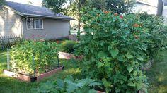 Raised flowerbeds