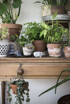 Apr 2020 - all things plants for the green fingered. See more ideas about Plants, Planting flowers and Indoor plants. Interior Plants, Interior Exterior, Indoor Garden, Indoor Plants, Belle Plante, Decoration Plante, Pot Plante, Room With Plants, Plants Are Friends