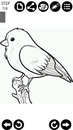 View bigger - How to draw birds for Android screenshot Love Birds Drawing, Bunny Drawing, Nature Drawing, Bird Drawings, Art Drawings Sketches, Animal Drawings, Cute Easy Drawings, Colorful Drawings, Bird Template