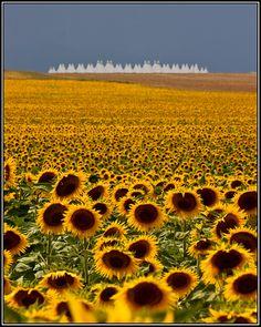 Denver International Airport, Denver, Colorado | Sunflowers and Airports by Ronda Kimbrow, via 500px
