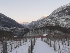 Vino del Ghiaccio,Ice Wine,Vin de Glace  Casa Ronsil