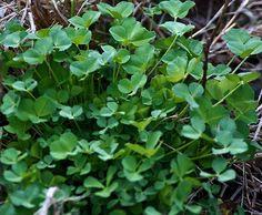 St. Patrick\'s Day Greens (via #spinpicks)