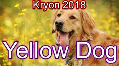 Kryon 2018 April - Go With Yellow Dog