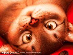 Милые зверушки японского художника Makoto Muramatsu