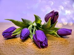 Purple Tulips by WhiteBook on DeviantArt Purple Tulips, Purple Love, Tulips Flowers, All Things Purple, Purple Rain, Shades Of Purple, Deep Purple, Purple Aesthetic, Tulips