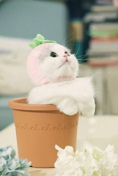 Pin by 준혜 on Cute Cute Cat Memes, Funny Cats, Pretty Cats, Beautiful Cats, Kittens Cutest, Cats And Kittens, Cat Wallpaper, White Cats, Cute Animal Pictures