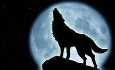 Moon doggie!!