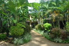 new zealand tropical gardens - Google Search