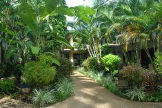 new zealand tropical gardens - Google Search