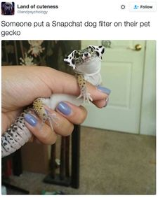 You certainly wouldn't see a gecko like this. 21 Pictures That Will Make You So Goddamn Grateful For The Internet Cute Animal Memes, Animal Jokes, Funny Animal Pictures, Cute Funny Animals, Cute Baby Animals, Funny Cute, Hilarious, Cute Lizard, Cute Gecko