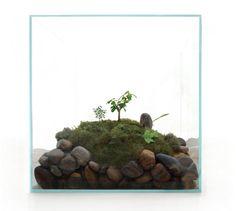 cube-terrarium-james-modern