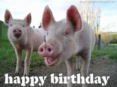 3D Gif Animations - Free download i love you images photo background screensaver e-cards: Happy Birthday Pig Greeting eCard funny happy birthday pig cartoons pigs farm animals humorous cute Animal Pictures Crazy pig ecards gifs animation free