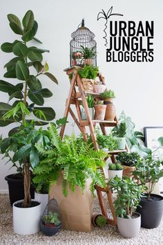 Yes! to this month's Urban Jungle Bloggers topic – show your plant gang! Last month I shot a huge collection of my plants on our Ercol dresser and was blown away by how insanely, gobsmackingly beautiful they all looked that I really didn't need much encouragement to do it again! So here is 80% of … Read more...