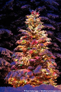 Lighted christmas tree covered with snow. <3