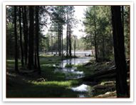 Town of Payson - Official Tourism Website > Home