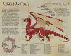 Dragon Anatomy - Muscle by ~UberKudzu on deviantART