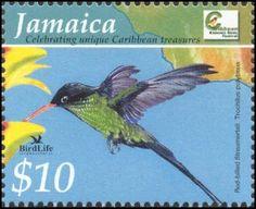 Jamaica's Dr. Bird. National Bird.