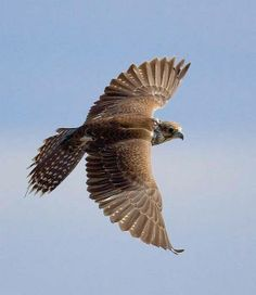 Great Pictures Birds of Prey close up Concepts Birds of prey are present in a wide range of habitats, from coasts to mountain tops, and some specie Wedding Birds, Artificial Birds, Birds Of Prey, Raptors, Bird Species, Great Pictures, Ancient Egypt, Beautiful Birds, Mammals