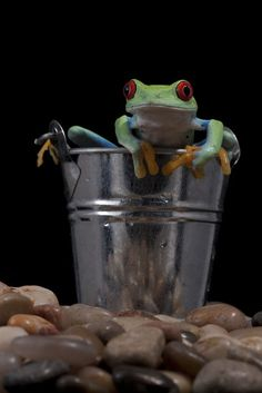 Got a frog in my bucket by AngiWallace (print image)