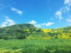 Sunday adventures brining us to Ojai where mustard plant takes over the mountain sides! Vibrant patches of yellow . . . . #livecolorfully #mountains #flowers #happysunday #sundayfunday #livebeautifully #bedeeplyrooted #abmhappylife #acolorstory #nature #beauty #california #wildflowers #darlingweekend #flowers #flowermagic #livefolk #explore #cali #abmlifeiscolorful #colorful #staywild #wildflora by wildfloradesign