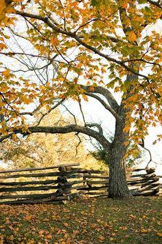 Ahhhh...Autumn