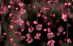 Spring Flower Widescreen iPad Background Image